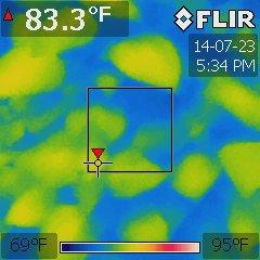Ocimum basilicum under a BD360-U at 75 °F