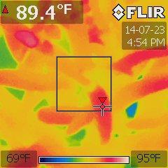Neoregelia hybrid under a BD360-U at 84 °F