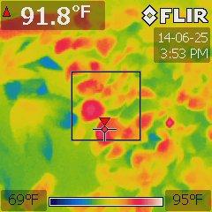 Ocimum basilicum under a 1000W HPS at 75 °F