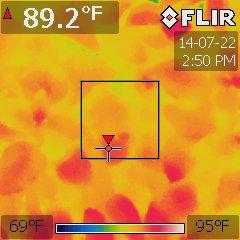 Ocimum basilicum under a Platinum XL-U at 84 °F